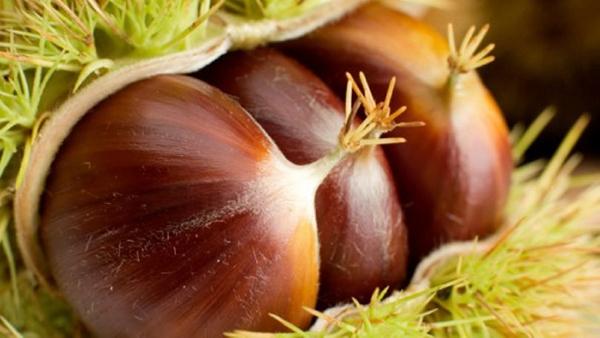 Κάστανα: 22 συνταγές για γλυκά και φαγητά! Αφιέρωμα στον πιο αγαπημένο καρπό της εποχής.