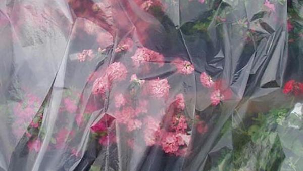 Πώς να προστατέψουμε τα φυτά μας από το κρύο!