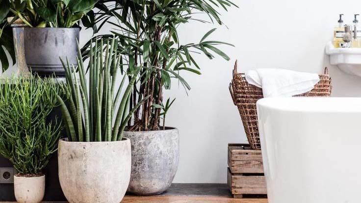 Όσα πρέπει να ξέρετε για τα φυτά εσωτερικού χώρου στη διακόσμηση