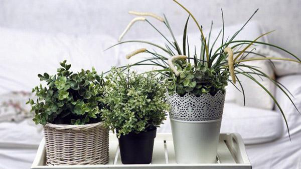 Ποια φυτά είναι κατάλληλα να τα έχετε μέσα στο σπίτι;